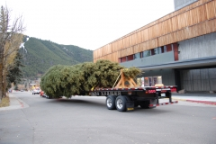 Capitol Christmas Tree Celebration
